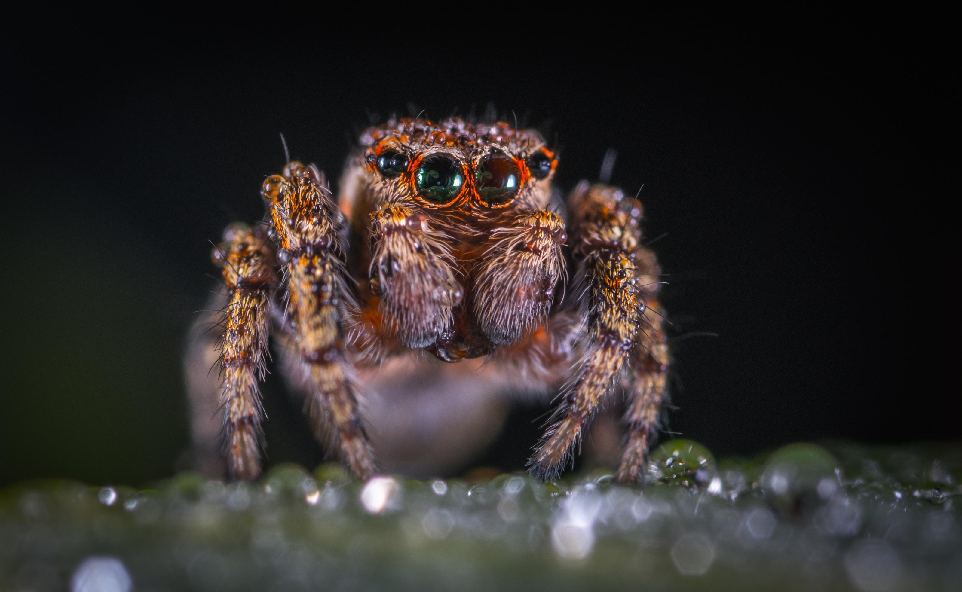 A aranha arranha a jarra, a jarra arranha a aranha: o uso dos venenos de aranhas para tratamento de doenças