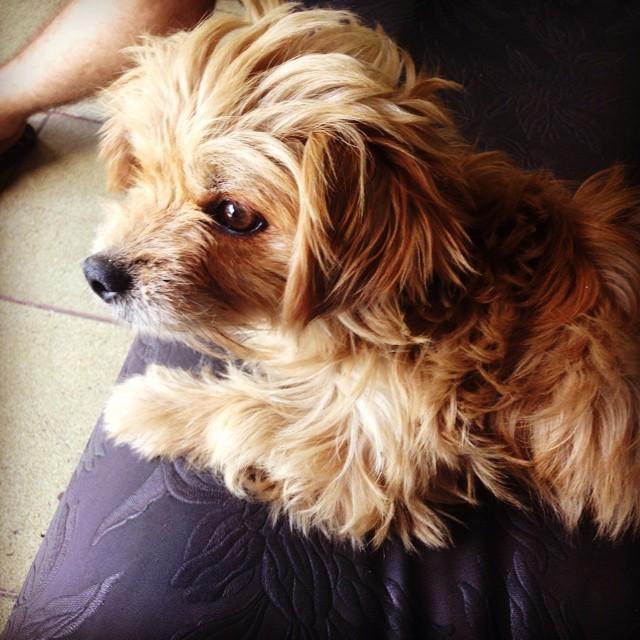 Animais Domésticos Ou Selvagens: Uma Aula De Compaixão