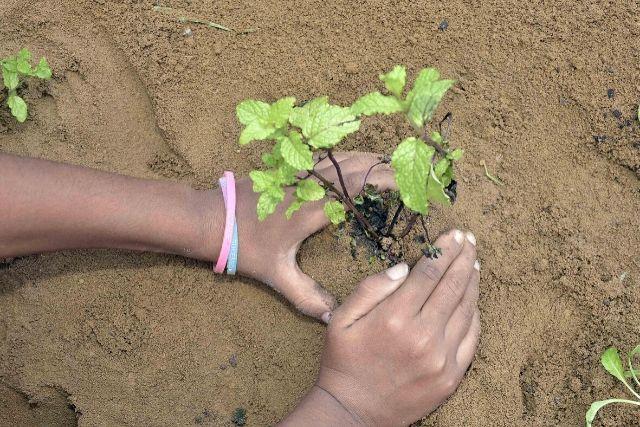Mãos Plantando – Secom Pms