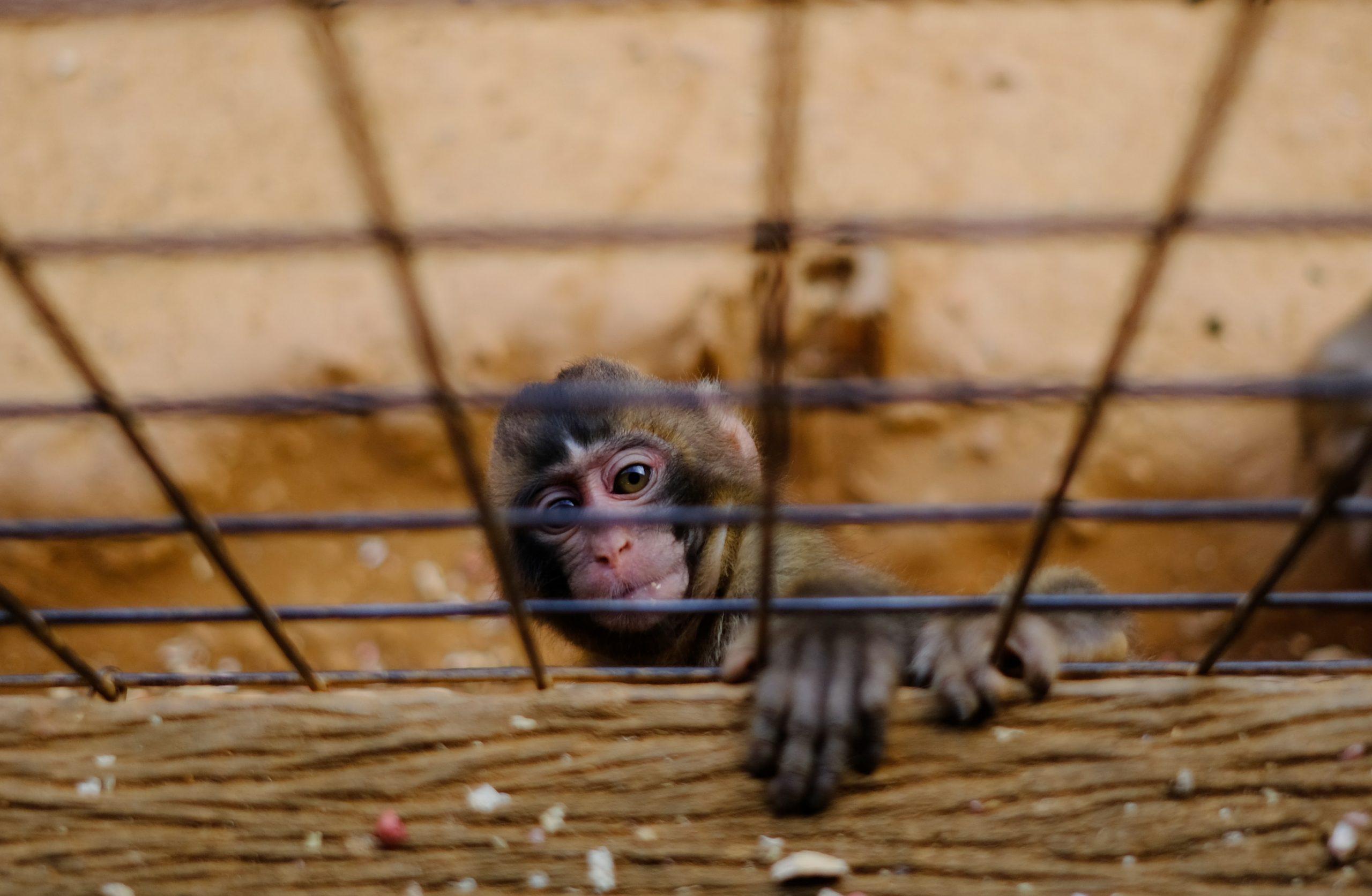 O Zoológico Como Questão Sociocientífica